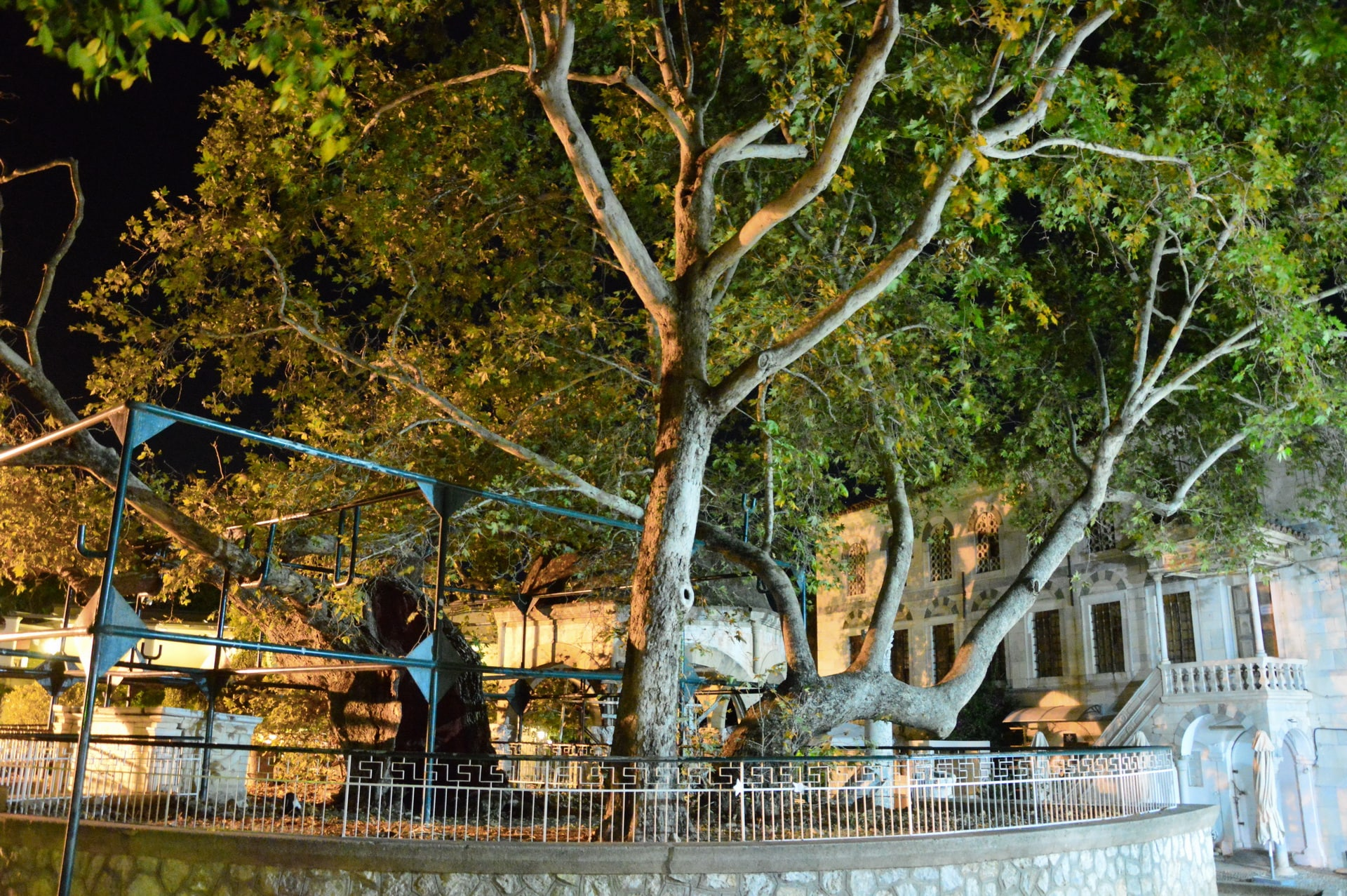 It is said that Hippocrates, the father of medicine, taught his pupils under this tree in Kos town